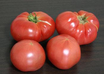 TANBO・中島さまよりいただいたトマトの写真
